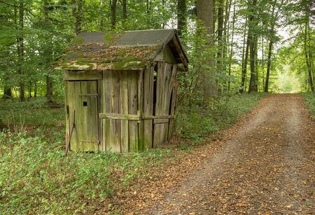 ruinous: small rundown cottage in a forest