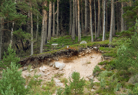 landslip: forest scenery with landslip around Lac Noir in the Vosges mountains near Orbey in Alsace, France