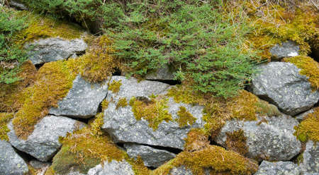 overgrown: some granite stones overgrown with moss