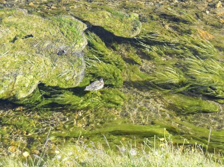 rivulet: high angle detail of a stream in Iceland including a duck swimming in clear water Stock Photo