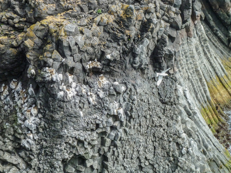rock formation: detail of a basaltic rock formation seen in Iceland Stock Photo