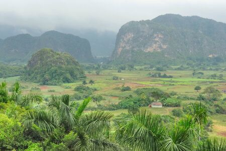 bowery: tropical scene around Vinales Valley in Cuba, a island in the caribbean sea