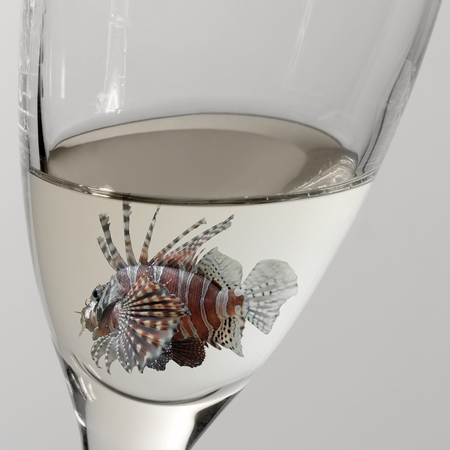 lionfish: a lionfish swimming in a drinking glass