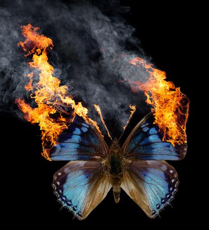 검은 색 바탕에 펼쳐진 날개가있는 푸른 불타는 나비 스톡 콘텐츠