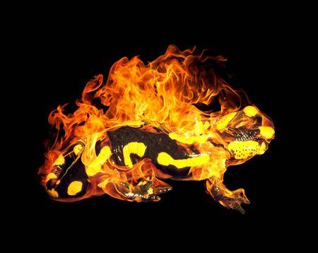 salamandra: una salamandra de fuego ardiendo en la espalda negro Foto de archivo