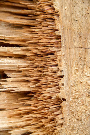 smithereens: abstract detail showing a piece of slivered wood