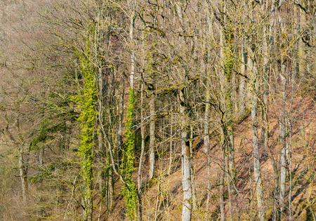 entanglement: distant view of a slope with forest at early spring time in Southern Germany