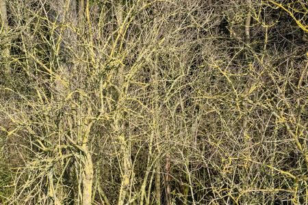 brushwood: natural full frame background showing lots of twigs at early spring time Stock Photo