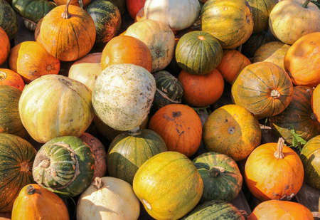 ambiance: colorful variation showing lots of gourds in sunny ambiance Stock Photo