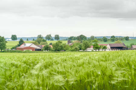 an agricultural district: stormy agricultural springtime scenery with grainfield around a small village  in Hohenlohe, a district in Southern Germany