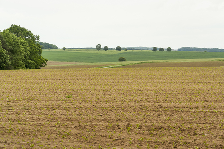 an agricultural district: agricultural scenery at a field with young plants in Hohenlohe, a district in Southern Germany Stock Photo