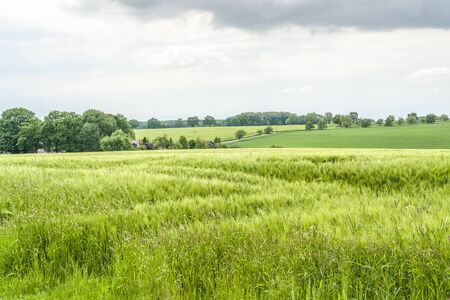 an agricultural district: stormy agricultural springtime scenery with grainfield and meadows in Hohenlohe, a district in Southern Germany