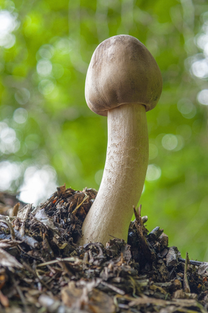 ambiance: low angle shot of a mushroom in blurry natural forest ambiance Stock Photo
