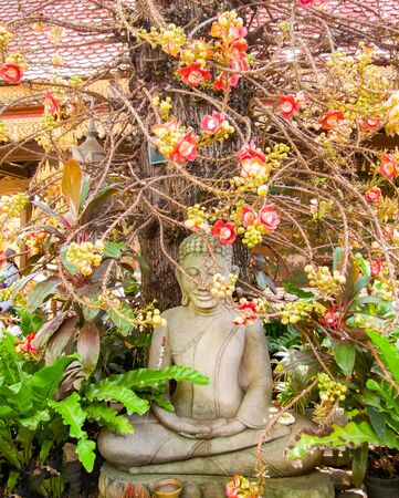 siamensis: Pentacme Siamensis plant and Buddha sculpture seen in Cambodia