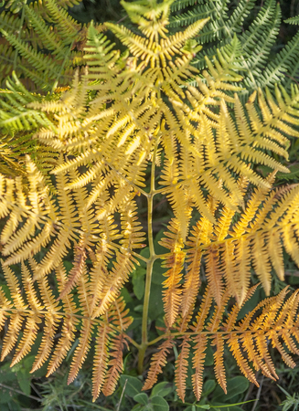 fern leaf: sunny illuminated colorful fern leaf closeup