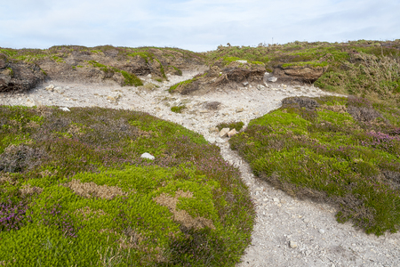 colorful heath vegetation seen around Pointe de Pen-Hir in Brittany, France Stock Photo