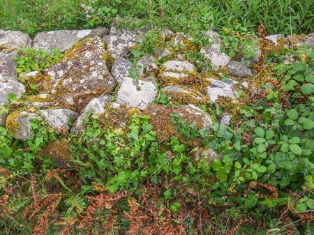 high angle shot: high angle shot of a overgrown low stone wall detail