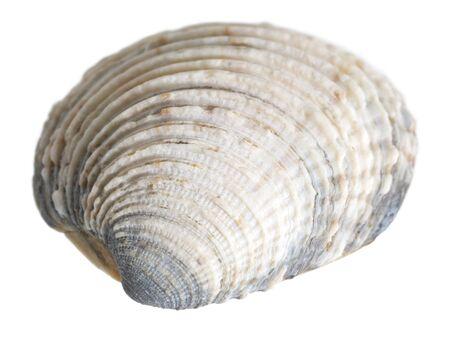 bibelot: macro shot of a sea shell in white back Stock Photo