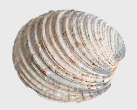 bibelot: macro shot of a sea shell in light back