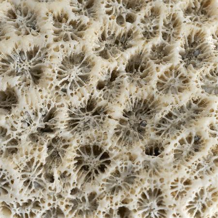 stony coral: full frame macro shot of a stony coral Stock Photo