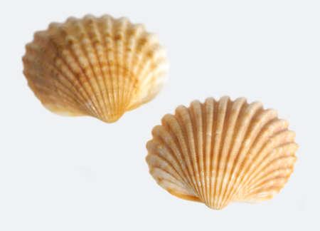 bibelot: macro shot of two sea shells in light back Stock Photo