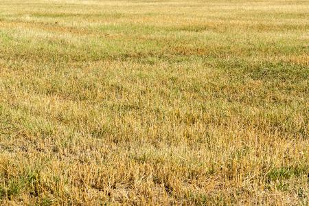stubble field: full frame stubble field Stock Photo