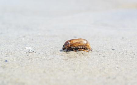 moistness: sunny scenery including a wet ockchafer on the beach
