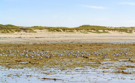 water birds: sunny beach scenery including lots of water birds around Penmarch in Brittany