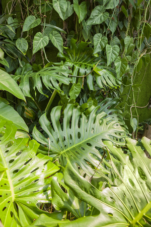 vivid scenery including monstera and other leaves