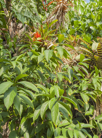 entanglement: vivid scenery including lots of various jungle plants