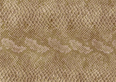 full frame scaled abstract brown patterned reptile skin surface Stock Photo