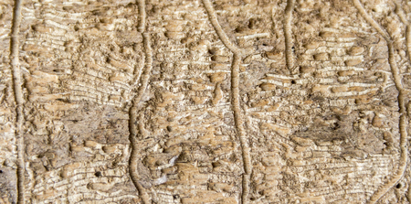 varmint: abstract detail of greenish weathered wood with bark beetle traces