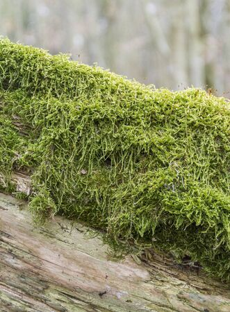 macro shot showing some green moss on wooden ground