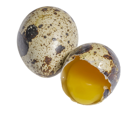albumen: two brown dappled quail eggs with a opened one in white back