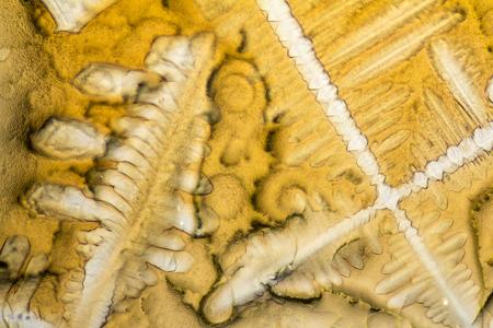 Tir microscopique montrant les micro cristaux d'assaisonnement fluide Banque d'images - 80082121