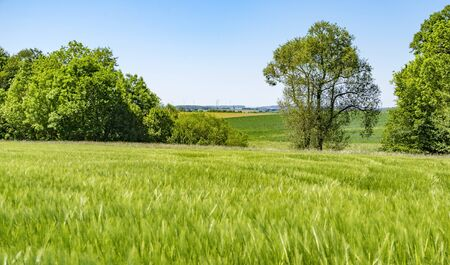agrarian: sunny spring time scenery in Hohenlohe, a area in Southern Germany
