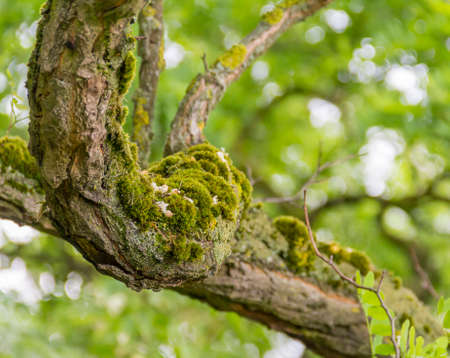 Mossy overgrown branch detail in natural blurry green back Stock Photo