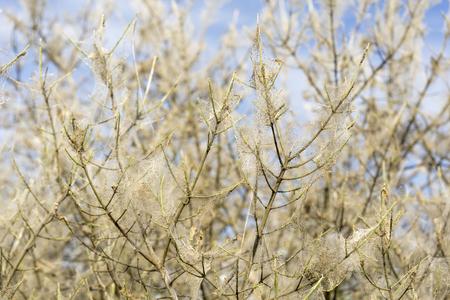 Busha pokryte łukowatych sieci na wiosnę