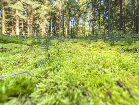 sunny illuminated low angle forest scenery with moss and ground cover vegetation