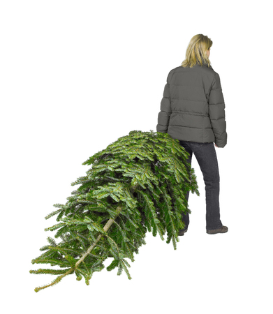 young woman walking away with christmas tree in white back Stock Photo