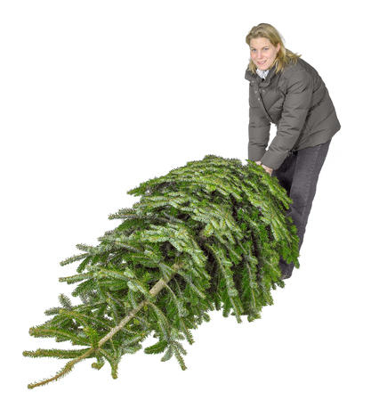 young woman pulling a christmas tree isolated in white back