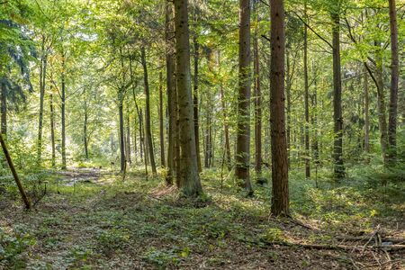 sunny illuminated idyllic forest scenery at late summer time