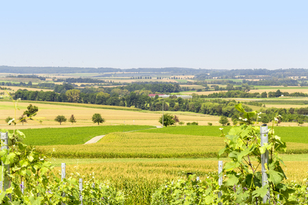 sunny winegrowing scenery in Hohenlohe, a area in Southern Germany at late summer time