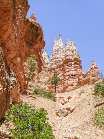 rocky scenery with hoodoos and trees at the Bryce Canyon National Park located in Utah in USA