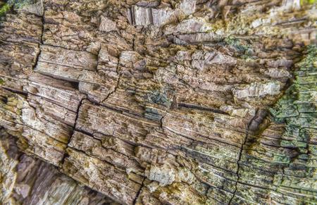 full frame rotting wood detail Stock Photo