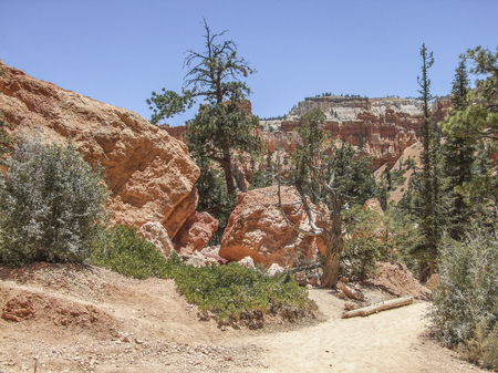 rocky scenery with trees at the Bryce Canyon National Park located in Utah in USA Stock Photo