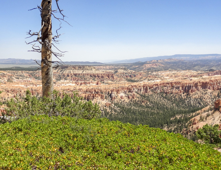 Aerial view and lonely tree trunk at the Bryce Canyon National Park located in Utah in USA