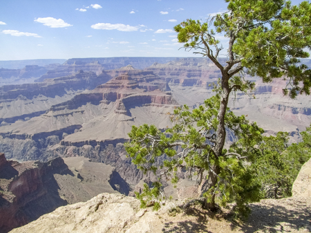 sunny aerial view including a tree at the Grand Canyon National Park in Arizona, USA