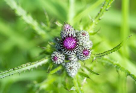 closeup shot of some purple flower buds in natural green ambiance