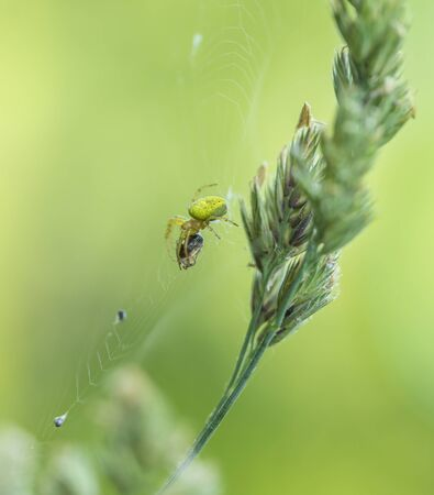 spider web including a spider with prey